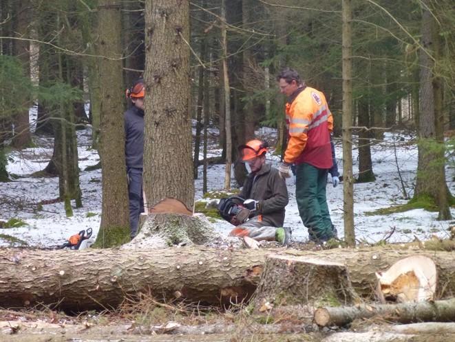 Baumarbeiten in unserem 8 ha Wald